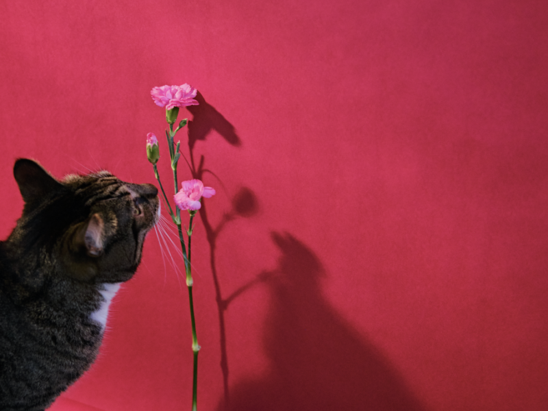 Kater Sam en bloemetjes op roze achtergrond